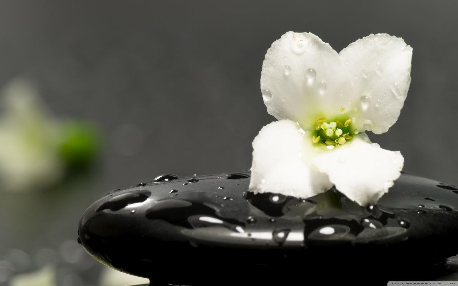 AnMa ZiNe  een blog over alles wat groeit en bloeitZen Water Images
