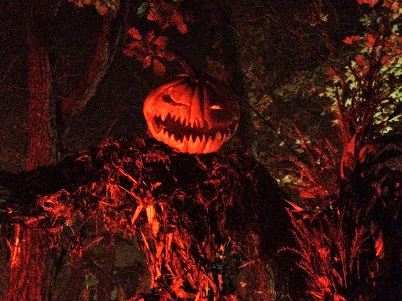 Haunted Overload Pumpkin Head Scarecrow - Halloween New England