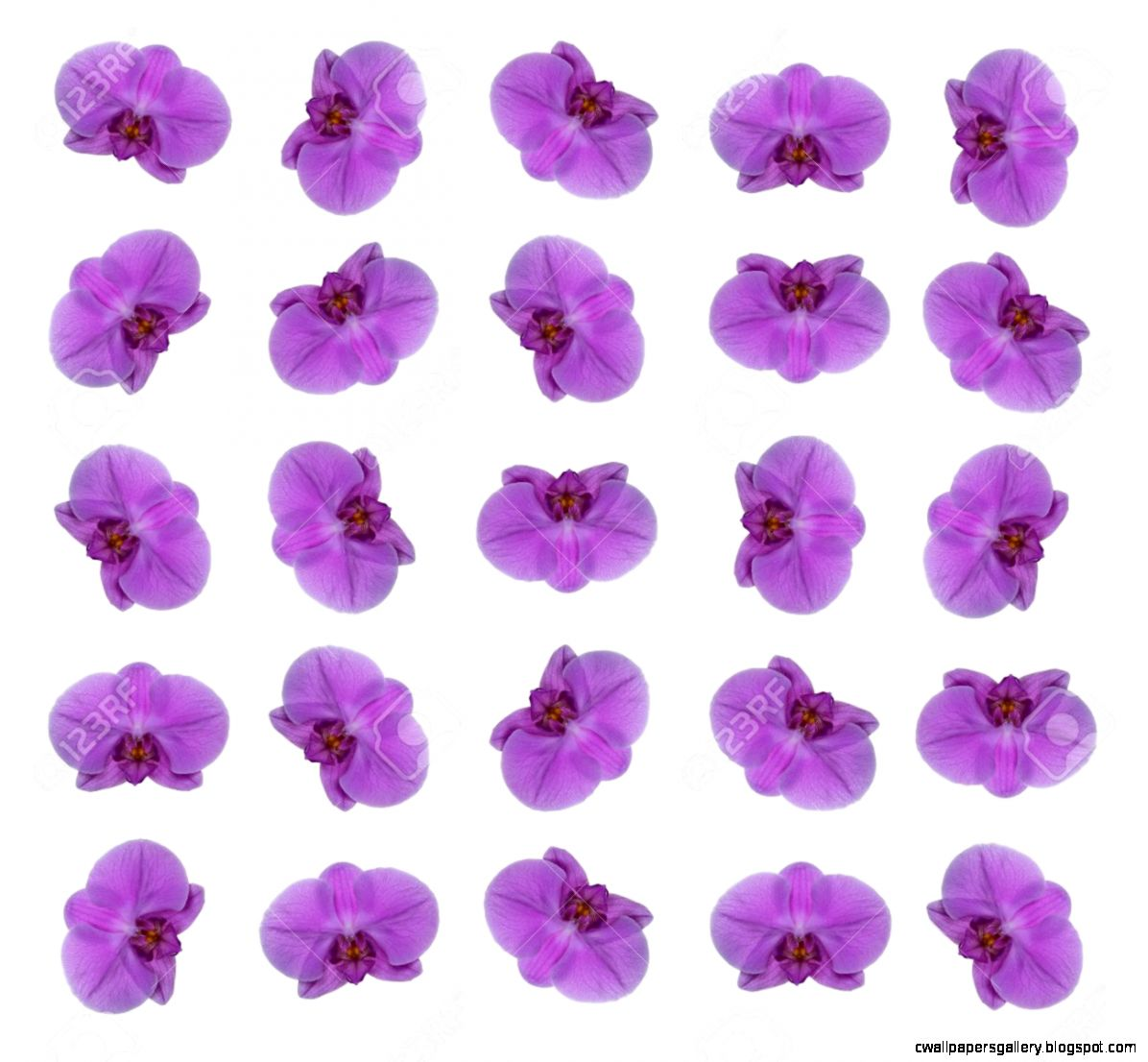 A Pattern Of Single Purple Orchid Flowers Stock Photo Picture And