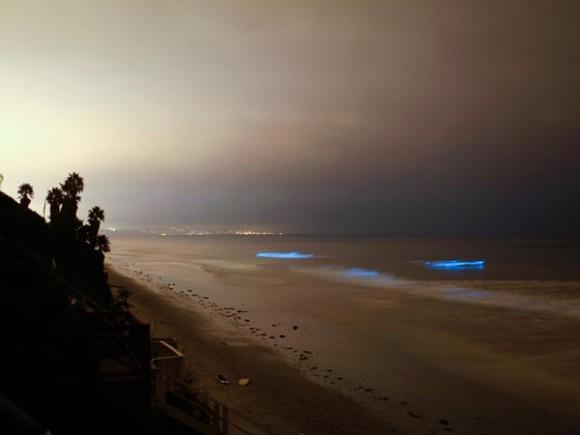 عندما تتلألأ الشواطىء كالنجوم  Glowing-waves-bioluminescent-ocean-life-explained-leucadia-california_50150_600x450-580x435