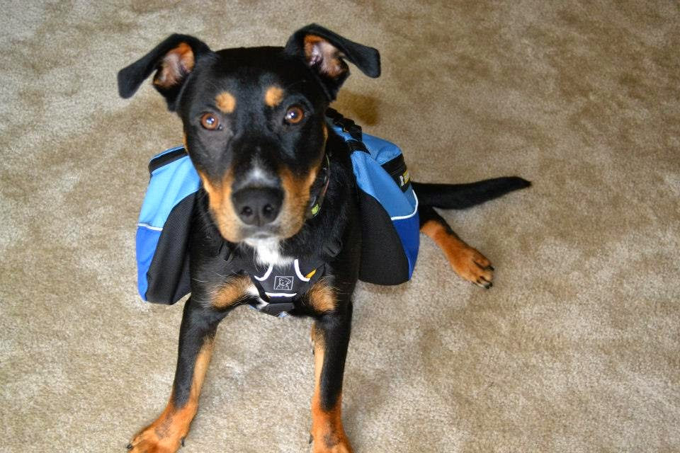 My dog, Luke, with his backpack being adorable | Business, Life & Design