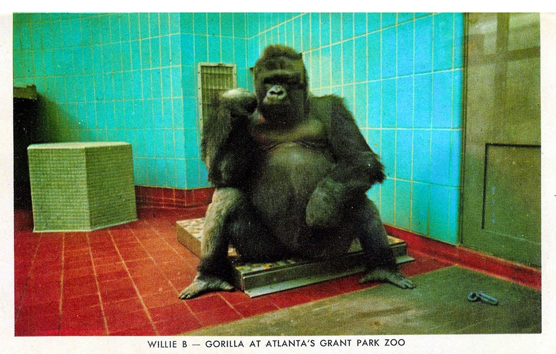 The Atlanta Zoos Bad Publicity Finally Prompted City And Concerned Citizens To Do Something About It Some Folks Called For Zoo Be Shut Down