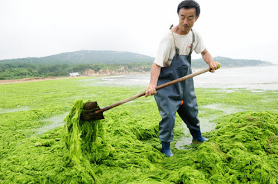 Algae In China