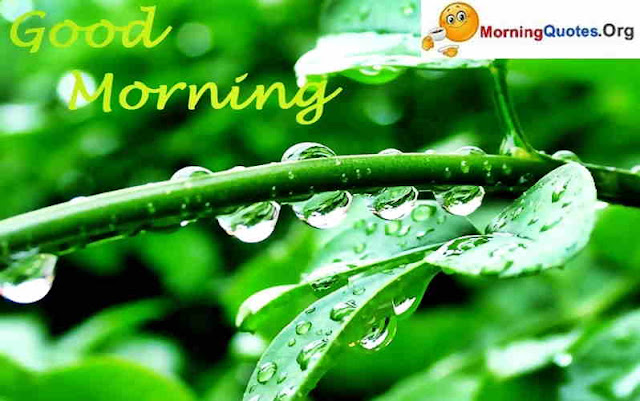 Good-Morning-and-Have-A-Nice-Day