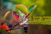 Задание с ОЭ на выбор - листья, ягоды, грибы, тыква