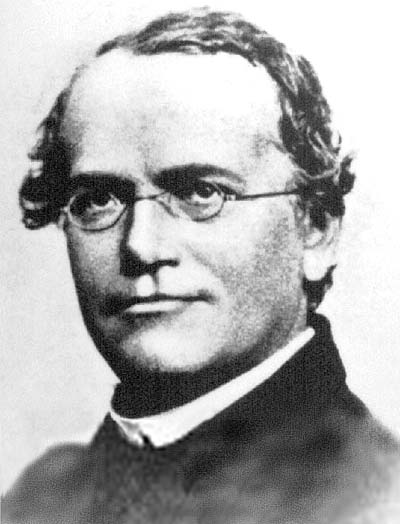 Cool Wallpapers  Free on Free Wallpapers  Gregor Mendel S 189th Birthday
