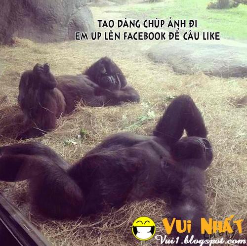 Ảnh chế vui câu Like trên Facebook