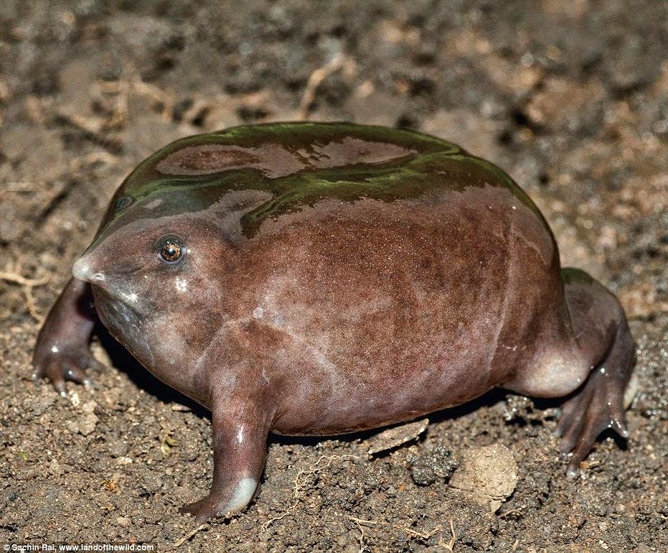 Animales más raros y feos del mundo FOTOS UN1ÓN  - fotos de animales raros y feos