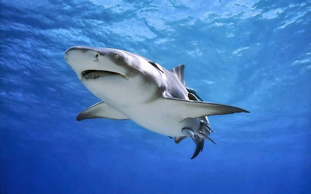 акула с детьми