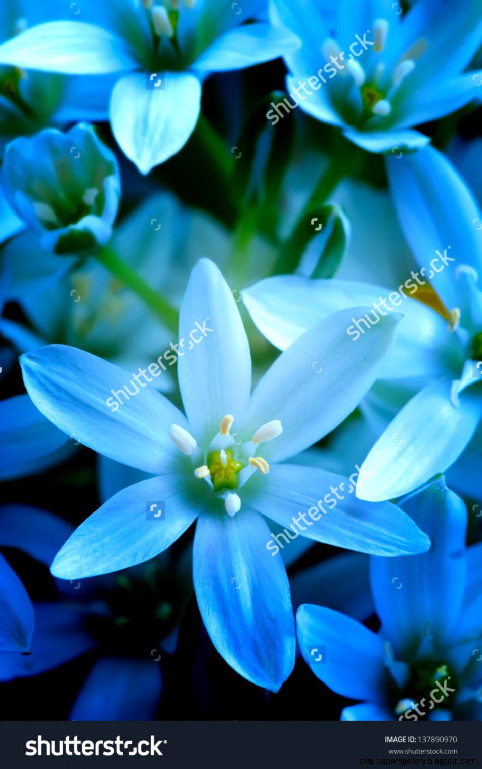 Blue Summer Flowers Close Up Stock Photo 137890970  Shutterstock