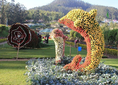 Flower show at Ooty 2011 stills