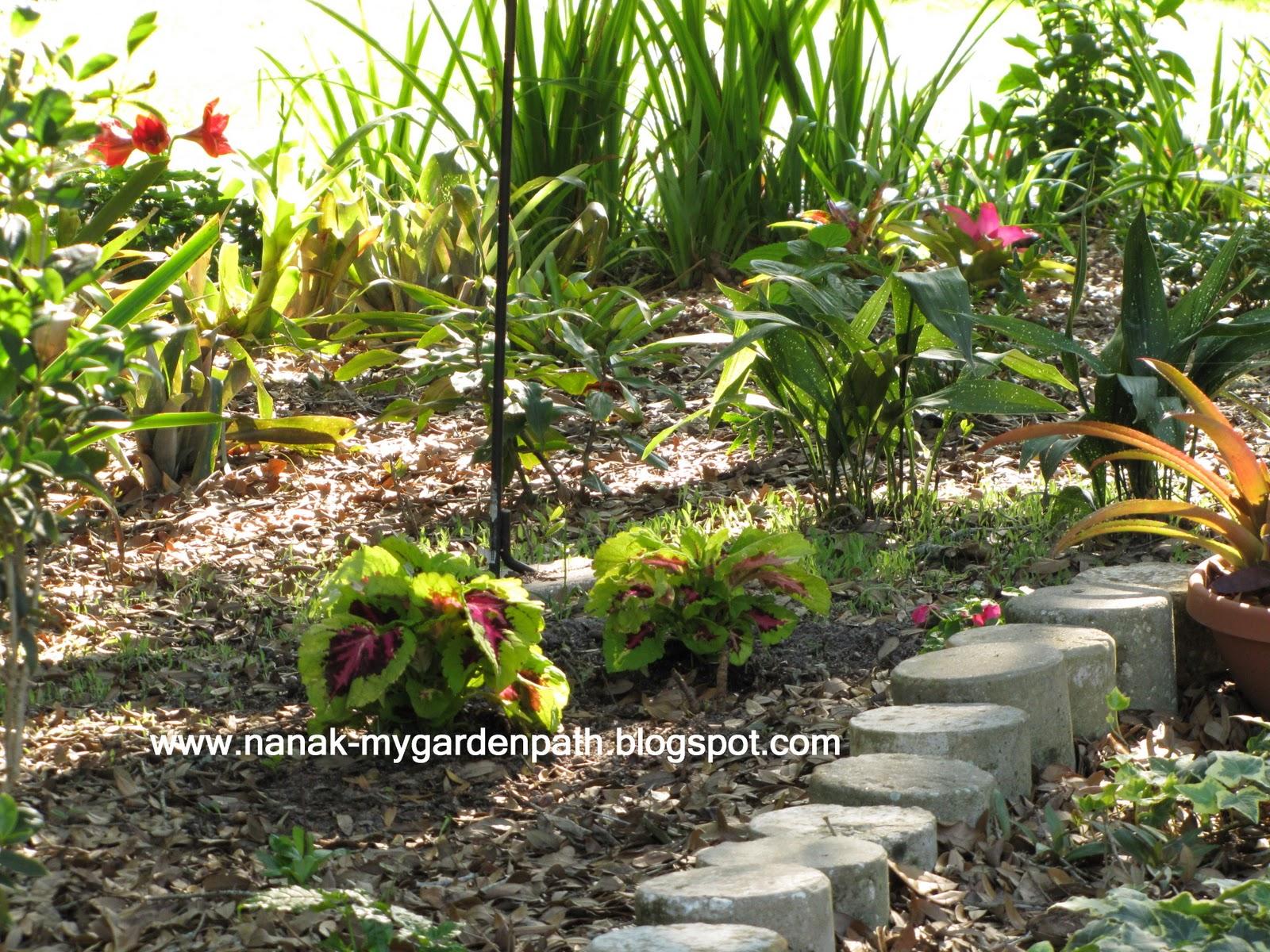 Planting Under Oak Trees : My garden path under the oak tree