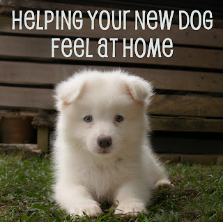 A Dog's Life: Helping Your New Dog Feel at Home