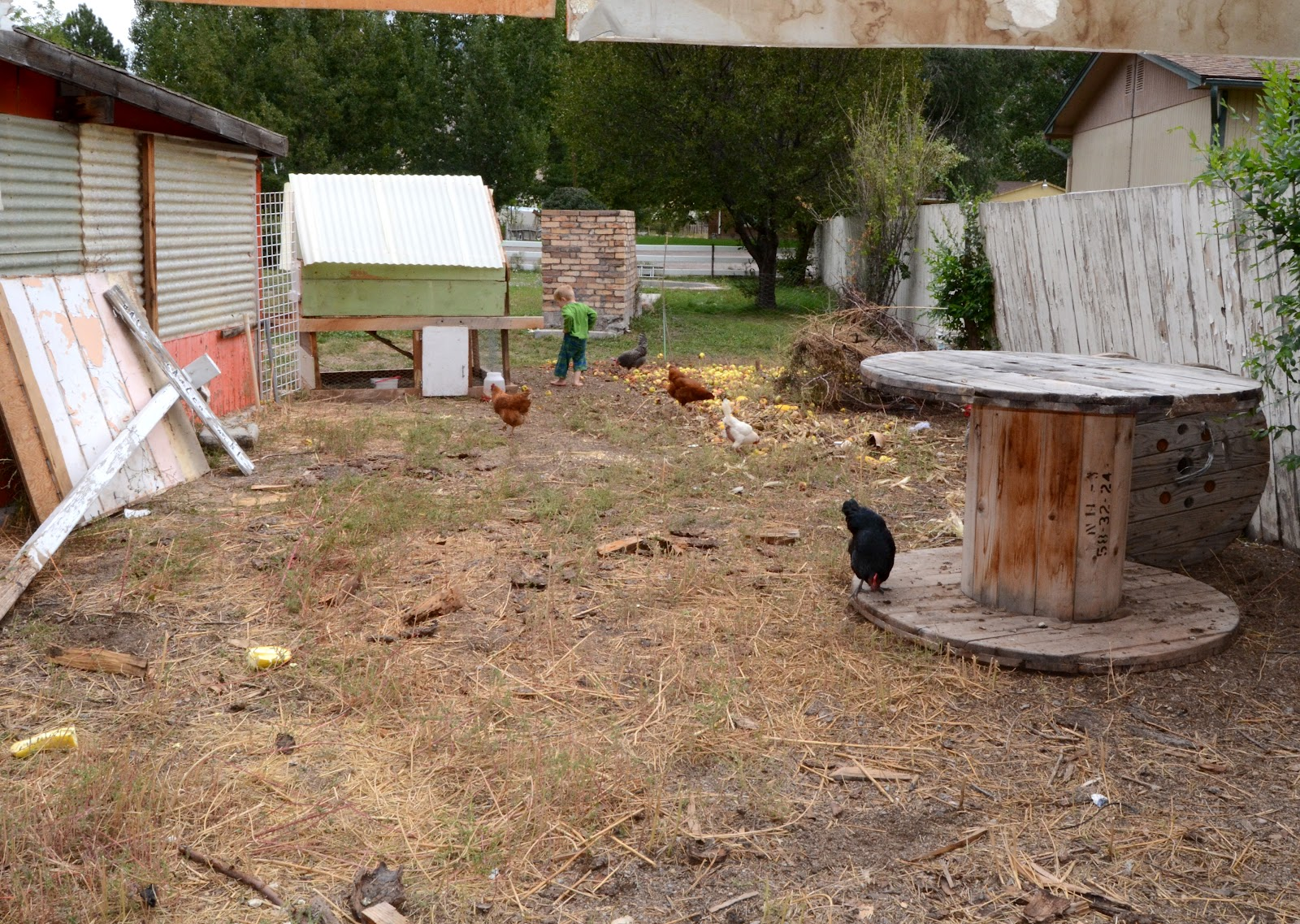 backyard chickens all cooped up bless this mess