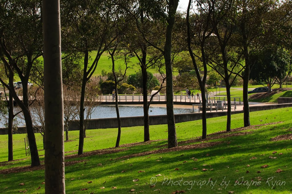 Bicentennial Park Is Part Of The Sydney Olympic You Can Hire A Bike And Ride Around Many Pathways To Sculptures Lakes Lookouts Wetlands Or