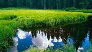 Beautiful Places Nature Images Green Grass Lake HD Wallpapers Free Downloads