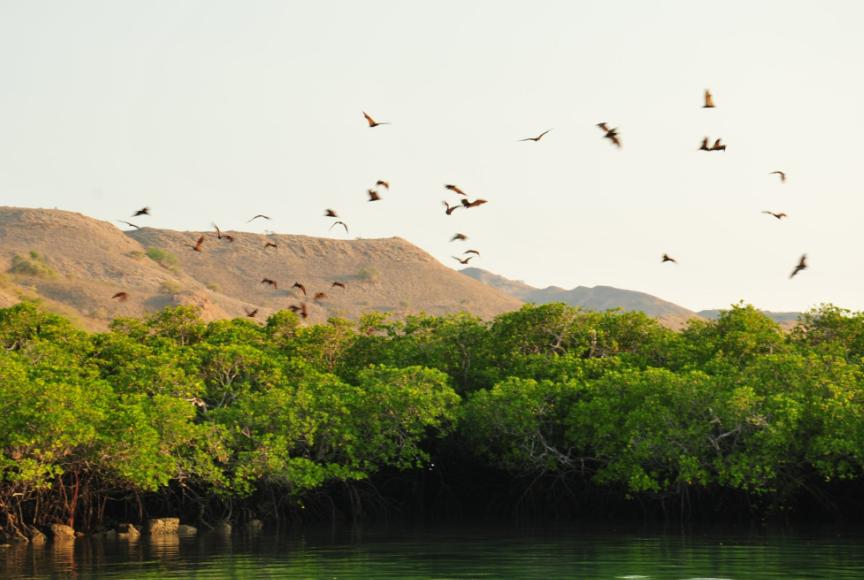 Pulau Kalong pada siang hari