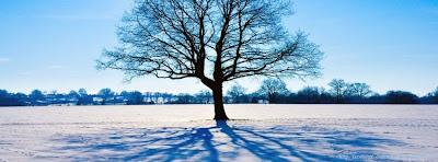Couverture facebook arbre