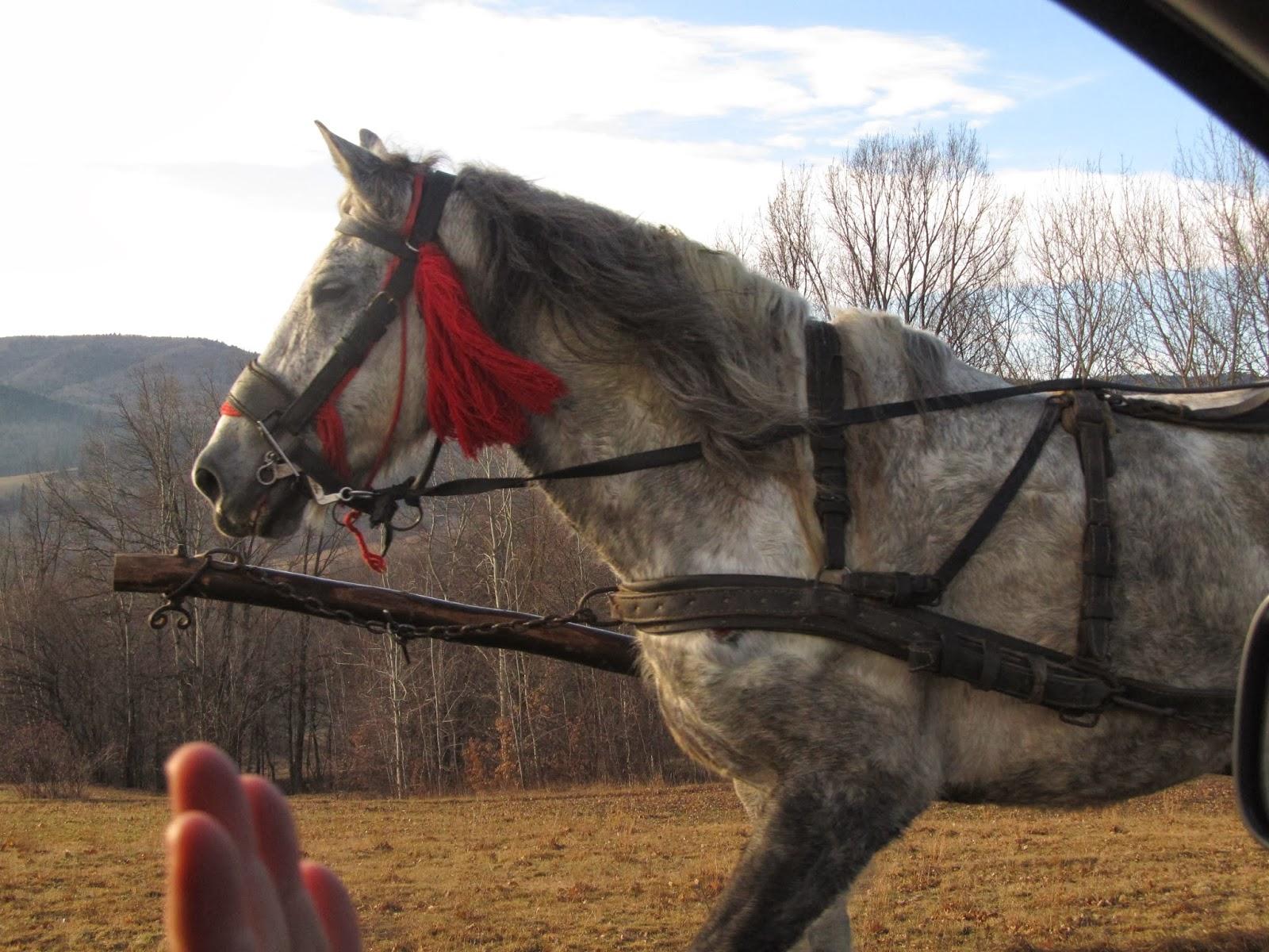 Уздечка для лошади: конструкция устройства 54