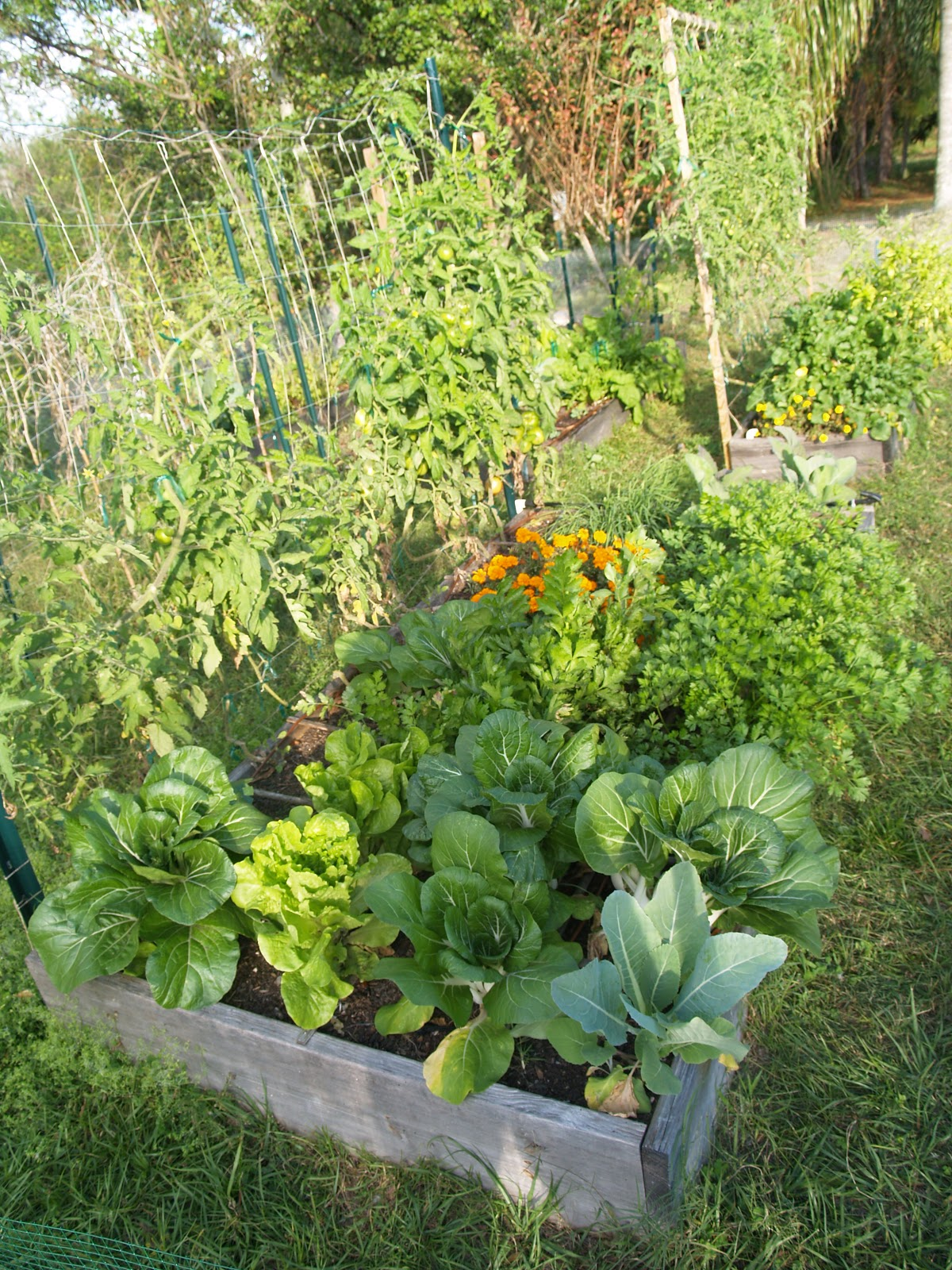 gardening in winter garden november 2012