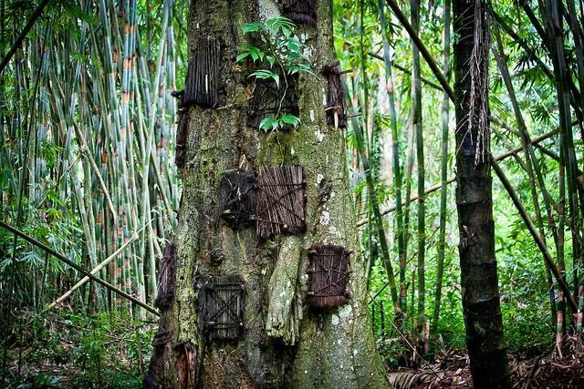 Nghĩa địa trên cây - Indonesia
