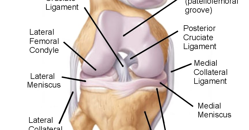 Diagrams Frontal View Knee Anatomy Diagram
