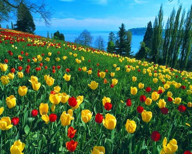 Spring season in pakistan the queen of the season spring wallpapers spring is the season normally come in the month of april and ends in may pakistani weather seasons of pakistan the spring season mightylinksfo