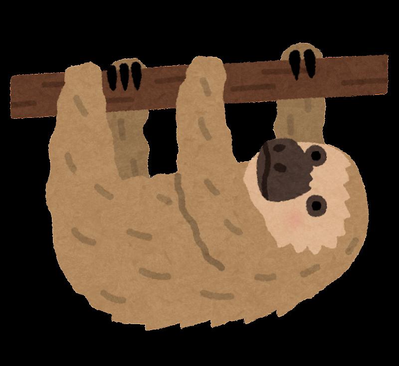 ナマケモノの画像 p1_35