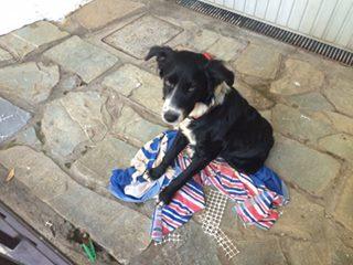 Τον σκυλάκο αυτόν τον κλέψανε από την αυλή σπιτιού (ο γείτονας) στο Γαλάτσι, Λόφο Κόκκου στις 12/10. Τον έχει δει κανείς?
