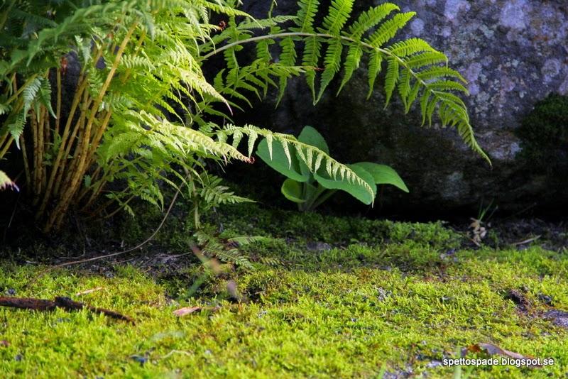 mossträdgård