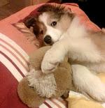 Witaj na psim blogu Sary :)