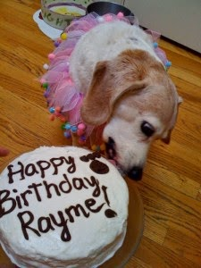 If You Want To Make Any Dog Party A Success Then Tasty Cake For The Birthday Boy Or Girl Is Must
