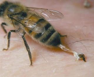 Racun Sengatan Lebah