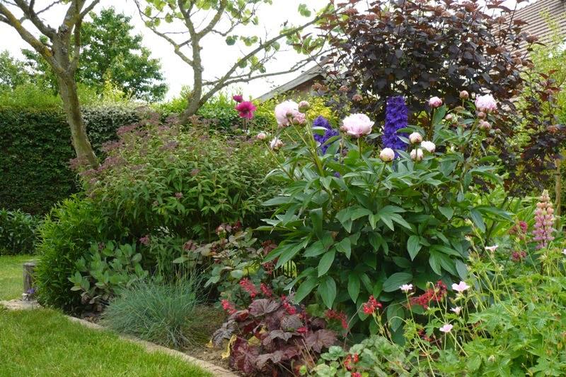 Le jardin de pacalou le jardin est ma maison for Le jardin en juin