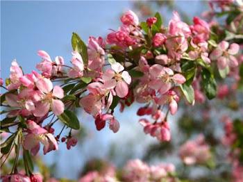 С весной!!!