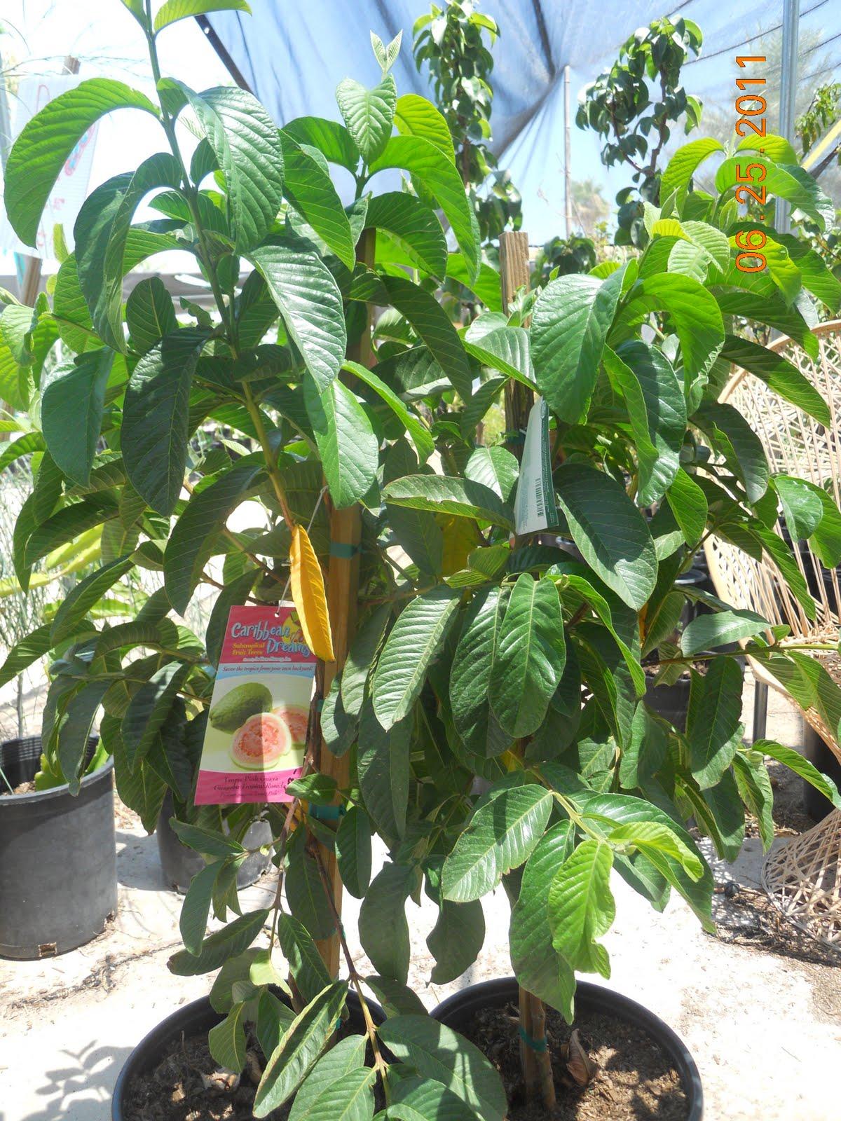 Fruit trees that grow well in the desert the best of desert 2018 - Planting fruit trees in the fall a garden full of vigor ...