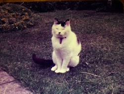 Feline Capers