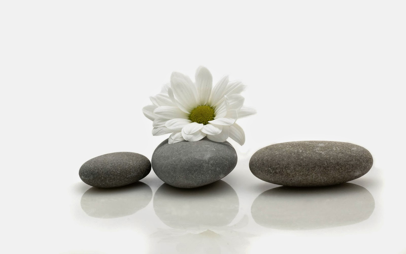 Zen-Wallpaper-with-white-background-black-stone-flower-1920x1200.jpg
