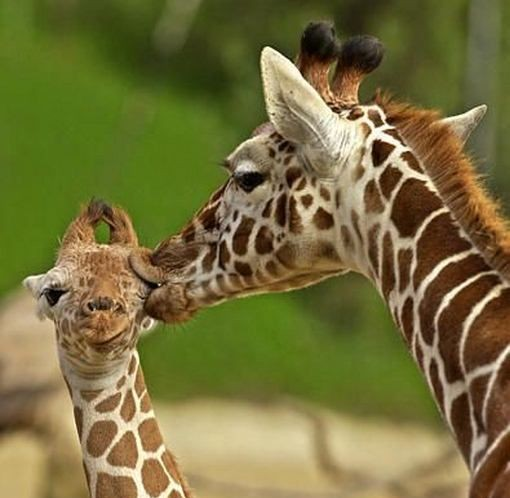 Funny and Cute Animals Kissing Photos | Funny World