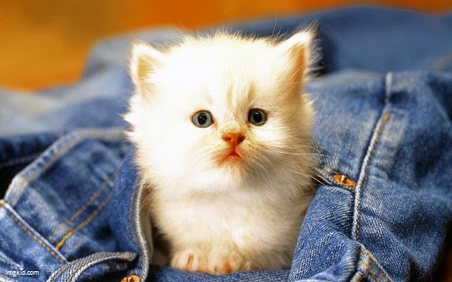 Belles images chatons