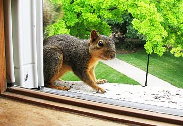 my friend  Squirrel