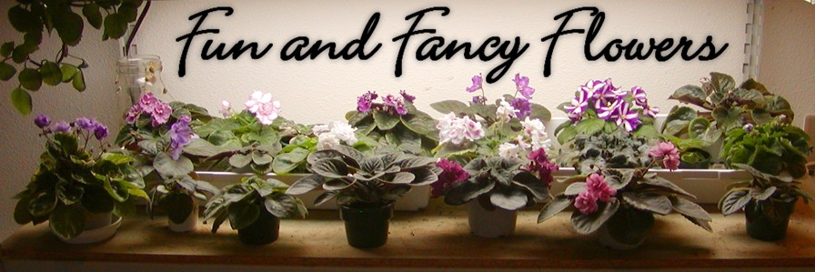 Fun and Fancy Flowers