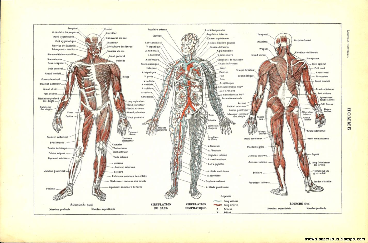 Anatomy Dictionary | HD Wallpapers Plus