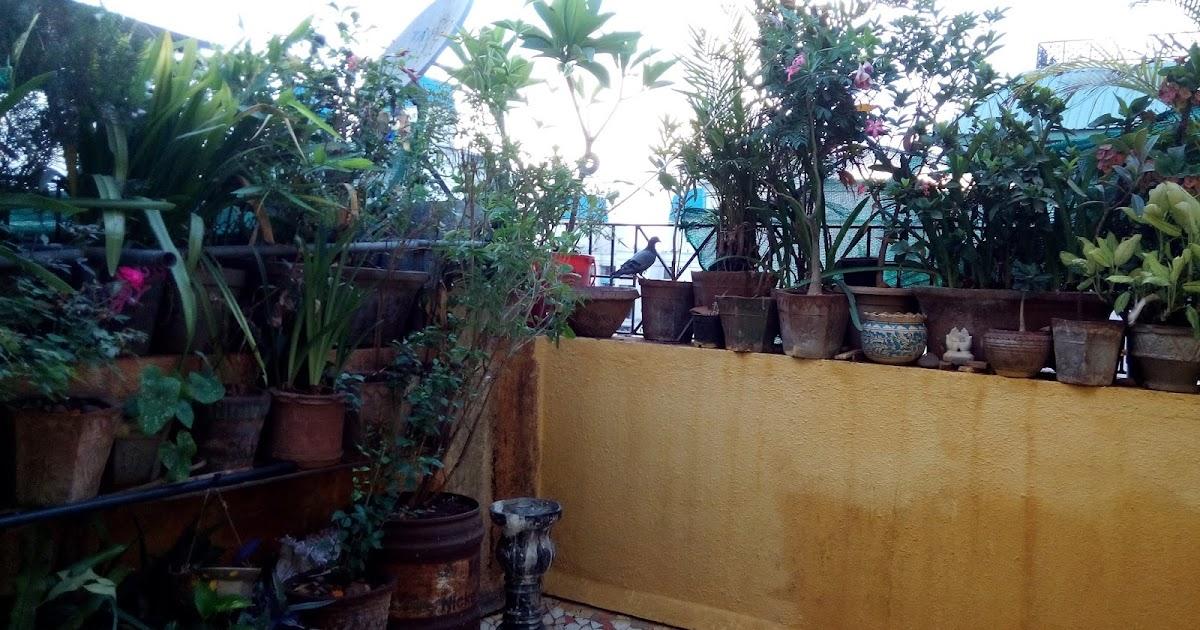 Garden Care Simplified Terrace Container Gardening
