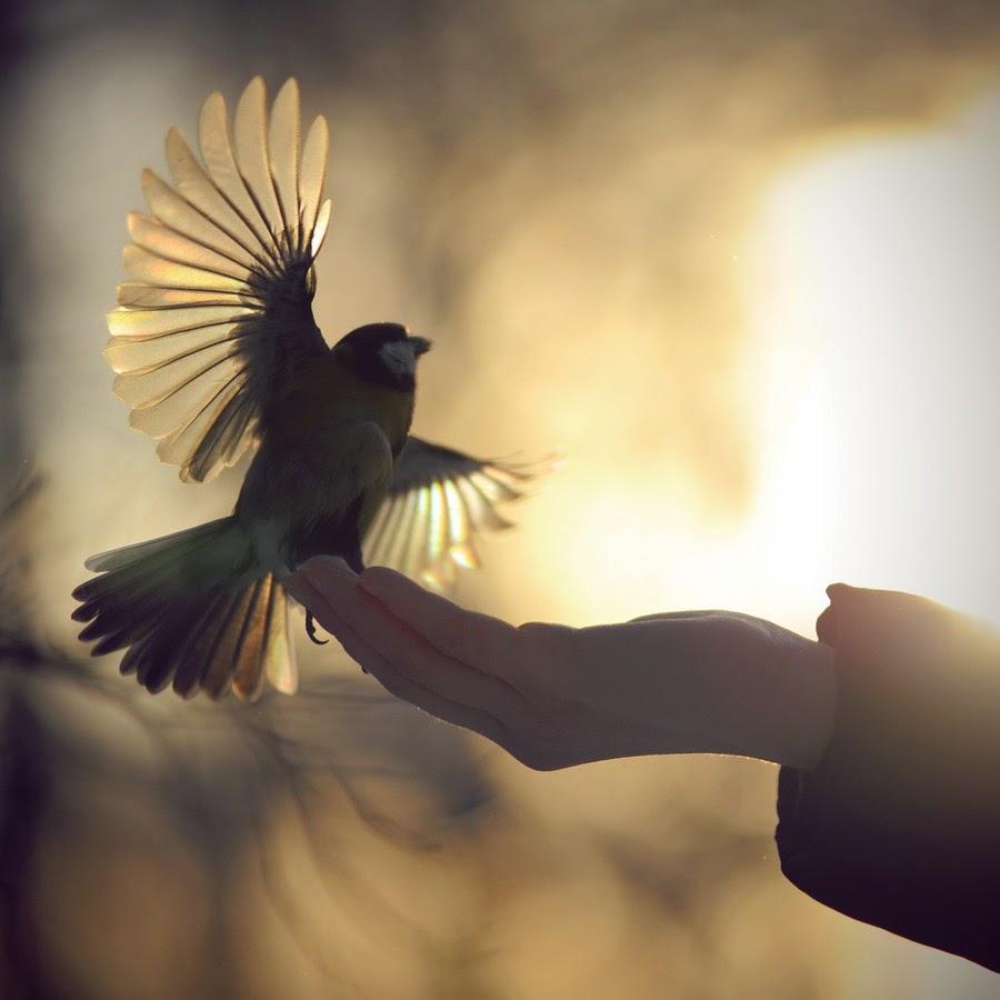 птица счастья на твоей руке