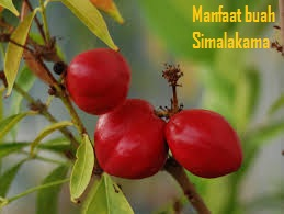 rasa bentuk khasiat manfaat buah simalakama