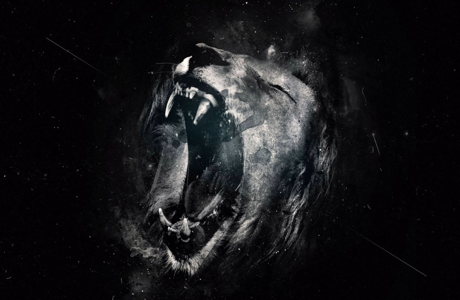 Wallpaper Hd 1080p Black And White Lion Wallpapers Quality