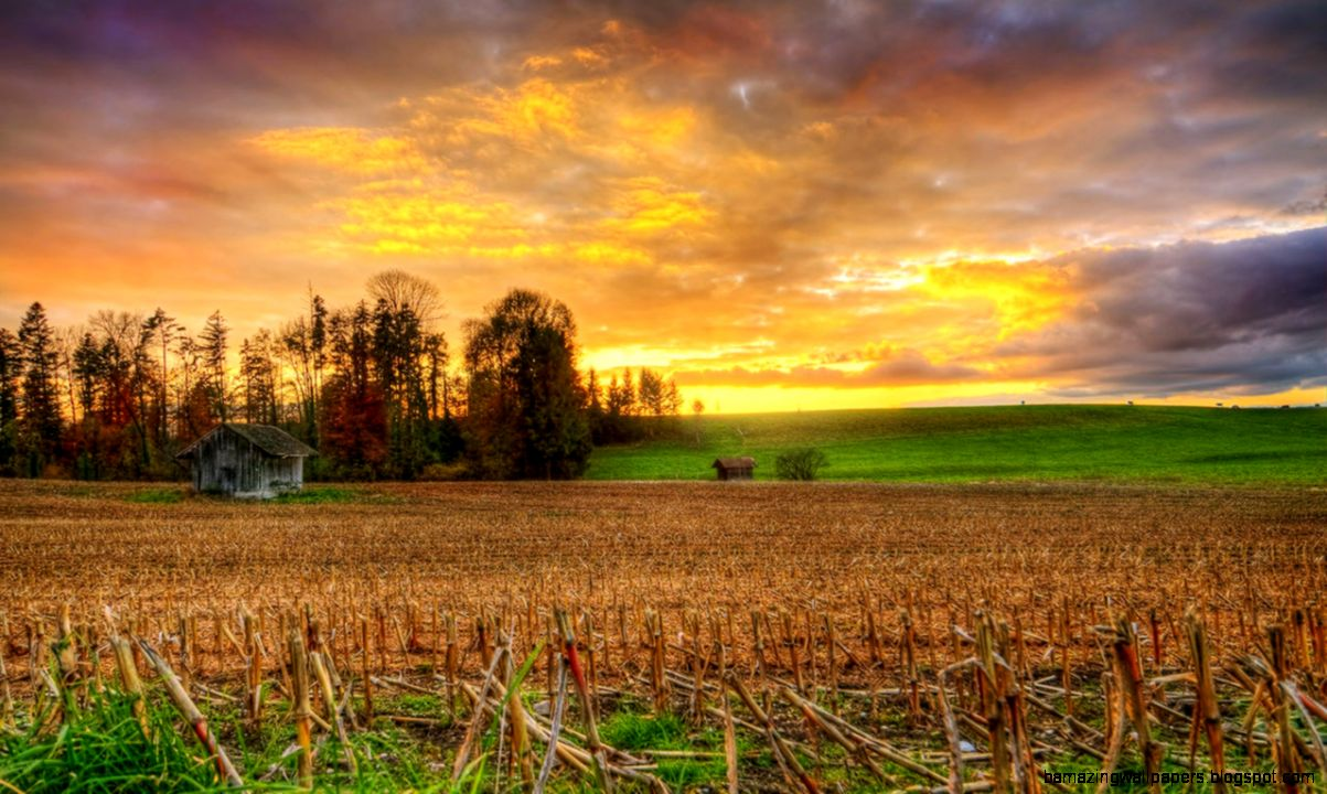 The harvest season the photography wallpaper sunset corn received