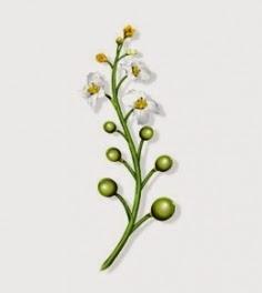 plante, le crambe, huile végétale, huile d'abyssinie, masque capillaire, cheveux crépus, Klorane