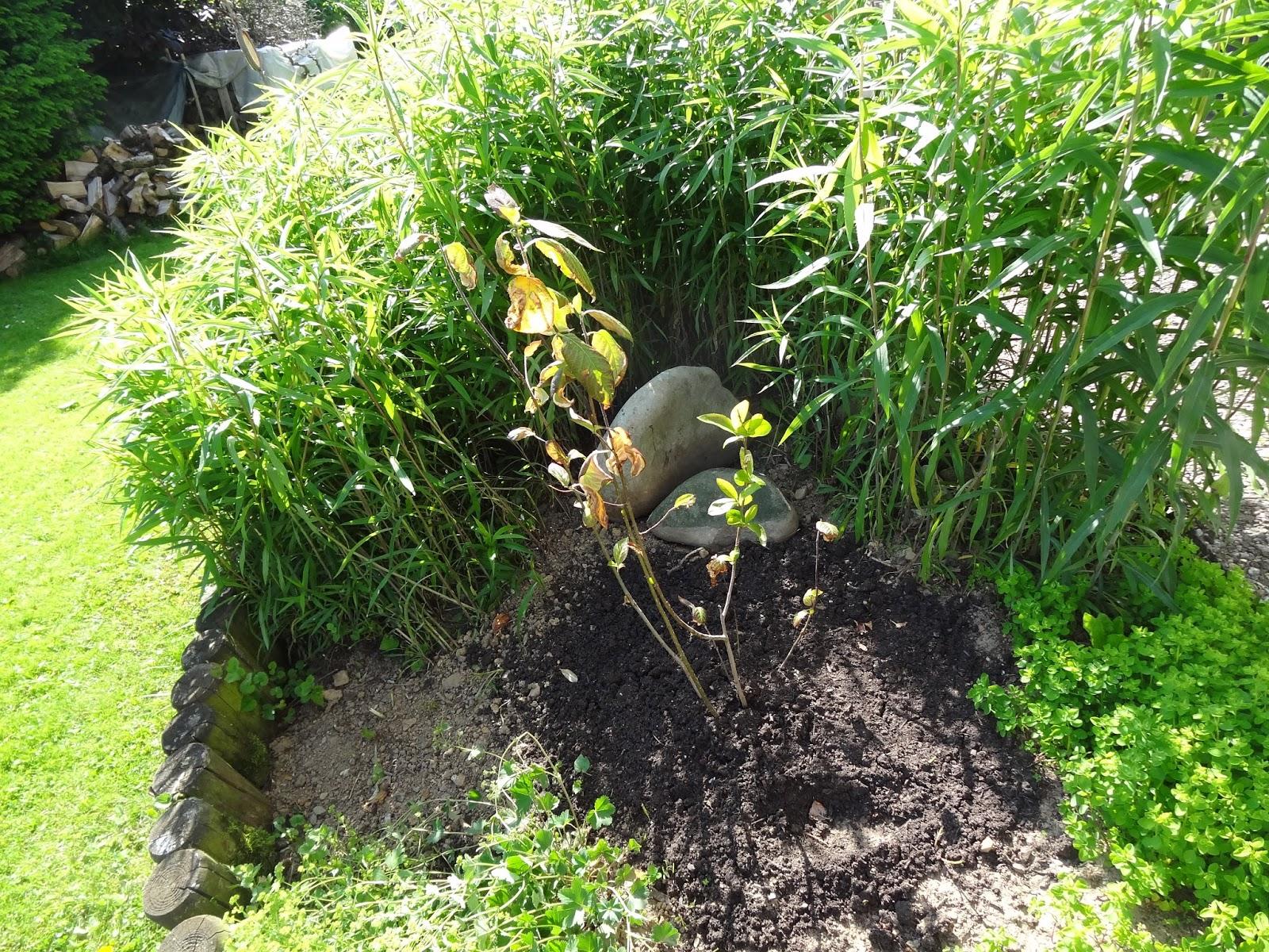 filine aronia mal sehen wie sie sich entwickelt meine pflanze. Black Bedroom Furniture Sets. Home Design Ideas